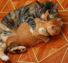 Go Hug Somebody! It's National Hug Day! - LOLcats is the best place to find and submit funny cat memes and other silly cat materials to share with the world. We find the funny cats that make you LOL so that you don't have to. Baby Animals, Funny Animals, Cute Animals, Wild Animals, Cute Kittens, Cats And Kittens, Ragdoll Kittens, Tabby Cats, Bengal Cats