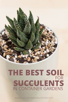 Indoor Container Gardening How to choose the right soil for succulent container gardens - Having well draining soil is crucial for succulents. This post has the perfect succulent soil mix recipe and tells you where to buy the components! Best Soil For Succulents, Propagate Succulents From Leaves, Succulent Bouquet, Growing Succulents, Succulent Gardening, Succulents In Containers, Succulent Arrangements, Succulent Terrarium, Planting Succulents