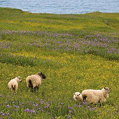Gros Morne National Park wildflowers