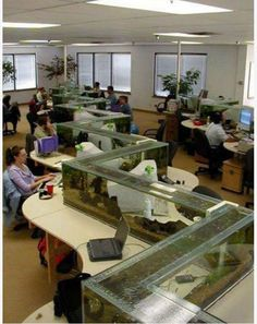 Office Fish Tank I know you would get more work done if this was in your office lyss lol