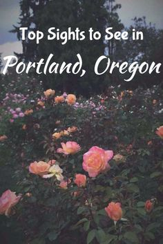 Check out these great ideas for what to do with an afternoon in Portland Oregon. Travel adventures, bucket list, road trip, Oregon activities.