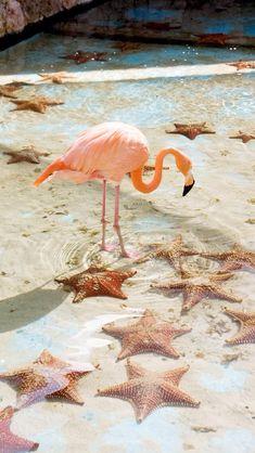 Flamingo + Starfish #love #animals