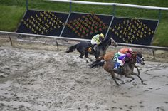 Early Lead Two horses die in first four races of Preakness Saturday. When is racing going to change?