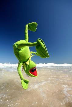 Kermit goes for a swim