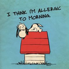 """""""I think i'm allergic to morning"""", Snoopy, I Know Just How You Feel Snoopy Love, Charlie Brown And Snoopy, Snoopy And Woodstock, Snoopy Quotes, Me Quotes, Funny Quotes, Cartoon Quotes, Monday Quotes, Bd Comics"""