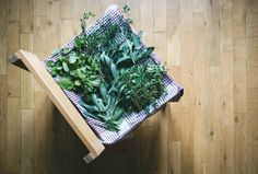 Drying herbs at home - FoodiesFeed