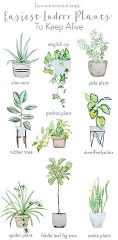 easy houseplants - easy indoor plans - green thumb - pothos plant - aloe vera - rubber tree maintenance - spider plant - fiddle leaf fig tree - snake plant - houseplants for beginners Natural Home Decor, Easy Home Decor, Decor Diy, Bedroom Decor Natural, Hone Decor Ideas, Rustic Decor, Simple Apartment Decor, Modern Bedroom Decor, Apartment Design