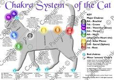 Chakra System of the Cat                                                                                                                                                                                 More