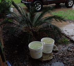 Put out buckets or barrels to save rain water. I use this water to water my plants.