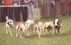 PETITION!! Greyhounds_by_Jan Eduard_German Language Wiki