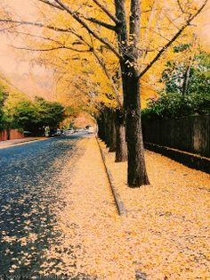 Savvy in San Francisco: Falling for Fall Popular Photography, Art Photography, San Francisco, Mellow Yellow, Mother Earth, Pretty Pictures, The Great Outdoors, Beautiful Places, Scenery