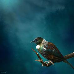 Tui Tane -med by Julian Hindson - prints Nz Art, Art For Art Sake, Tui Bird, Zealand Tattoo, New Zealand Art, Artwork Online, Sell Artwork, Art Online, Maori Art