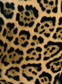 You can tell a jaguar from a leopard from their spots. This is jaguar print. Patterns In Nature, Textures Patterns, Color Patterns, Print Patterns, Animal Print Wallpaper, Animal Print Rug, Animal Print Background, Animal Print Fashion, Giraffe Print