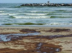 Dramatic Decline in Microscopic Life on BP's Oiled Beaches