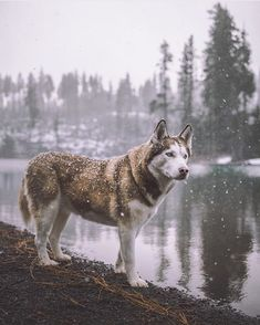 Are you ready for snow? Photo by @dllln #liveauthentic #livefolk @folkmagazine