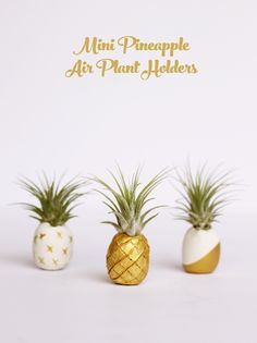 Mini pineapple air plant holders DIY Mini Pineapple Air Plant Holders You'll need White polymer clay Bamboo skewer Air plants (Tillandsia 'Ionatha') Gold paint Diy Clay, Clay Crafts, Pineapple Ideas, Deco Nature, Deco Floral, Air Dry Clay, Clay Projects, Plant Holders, Urban Gardening