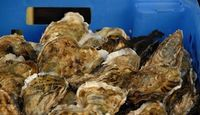 steamed oysters: this was good with beer as steaming liquid
