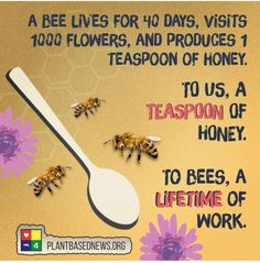 Bees play a vital role in the workings of our ecosystem! 🐝 A worker bee lives 40 days, and makes a fraction of a teaspoon of honey, each… Bee Facts, Vegan Facts, Save Our Earth, Vegan Quotes, Bee Friendly, Worker Bee, Bee Happy, Save The Bees, Busy Bee