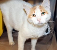 July 9, 2016 This is Donna, a beautiful cat with the saddest eyes who lost her way and is currently in the care of Greenville County Animal Control, a kill shelter in Upstate South Carolina. Donna …