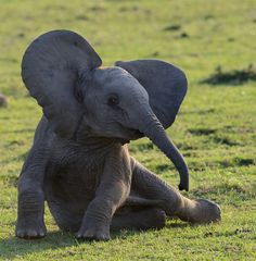 Elephant baby by Barbara Arstall