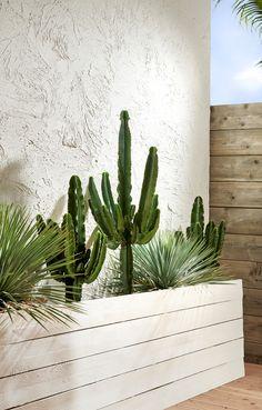 KARWEI | In een Ibiza tuin zijn natuurlijk cactussen aanwezig, zet ze in een mooie plantenbak van licht hout tegen een witte muur. Zo springen de groene planten en goed uit | 03-2019 Boho Glam Home, Rooftop Design, Dry Garden, Patio Planters, Asian Home Decor, Rooftop Garden, Garden Styles, Garden Planning, Garden Projects
