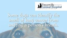 Interesting Pet Fact You Probably Never Knew - Enjoy! | Tuscawilla Animal Hospital has veterinarians that care about cats and dogs! Call us today to schedule an appointment. #veterinarian #veterinary Tibetan Mastiff, Veterinarians, Animal Facts, Pet Names, Live Long, Dog Cat, Pugs, Schedule, Cancer