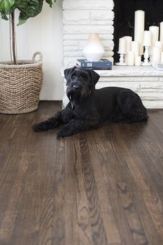Floor stain color How to Refinish Hardwood Floors Like a Pro - Room for Tuesday Hardwood Floor Stain Colors, Living Room Hardwood Floors, Dark Hardwood, Dark Walnut Floors, Wood Stain, Red Oak Floors, Dark Walnut Stain, Engineered Hardwood, Wood Wood