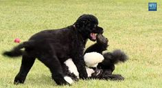 VIDEO: Watch Bo welcome his new sister Sunny to the White House. | White House