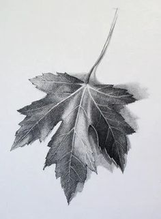 """Watch """"How to Draw a Leaf"""" Video Lesson to discover all you need to know How to Draw a Leaf. Drawing Academy presents in-depth info on How to Draw a Leaf Graphite Drawings, Pencil Art Drawings, Realistic Drawings, Art Drawings Sketches, Leaves Sketch, Observational Drawing, Pencil Shading, Object Drawing, Arte Sketchbook"""