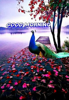 Good Morning Images For Whatsapp Good Morning Animals, Good Morning Friends Images, Good Morning Flowers Pictures, Good Morning Beautiful Pictures, Good Morning My Friend, Good Morning Images Download, Good Morning Gif, Good Morning Picture, Morning Pictures