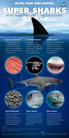 an analysis of the marine science of the shark animals Ranging animals, and marine ecosystems are complex research series report is a summary of the scientists' study protecting ocean life through marine science.