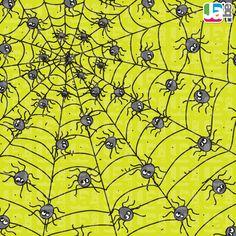Wat hebben deze spinnen voor ongewoons in hun net gevangen?
