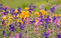 005 Free Spring Desktop Wallpaper Download free Spring