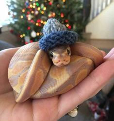 25 Cute Snakes with Hats 14 Cute Reptiles, Reptiles And Amphibians, Cute Little Animals, Cute Funny Animals, Beautiful Snakes, Animals Beautiful, Pretty Snakes, Snakes With Hats, Baby Snakes