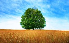 image of tree | Tree – Best Friend Of Humans -