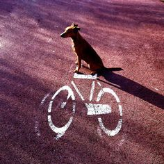 Bicycling puppy