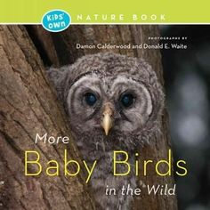 More Baby Birds in the Wild