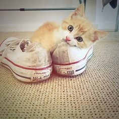 #kucingbikingemes ini kiriman dari : @alfred_the_ginger_cat    punya #kucingbikingemes juga? follow dan tag @kucingbikingemes  jangan lupa pakai #kucingbikingemes   via #catsofinstagram #cat #cats #catofinstagram #cat_of_instagram #catstagram #catsoftheworld #catslover #catgram #catagram #catslife #kucing #kucingku #kucinglucu #kucingsaya #kucingimut