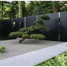 sculpted pine and creased steel and mirror wall zen garden Modern Landscaping, Backyard Landscaping, Dream Garden, Home And Garden, Japanese Garden Design, Japanese Style, Japanese Garden Backyard, Japanese Garden Landscape, Zen Garden Design