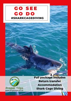 Spectacular great white shark cage diving packages, includes  a stay & a dive.