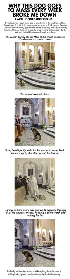 The Reason Why This Dog Goes To Mass Every Week Is Heart Breaking cute animals dogs dog story puppy animal pets stories heart warming