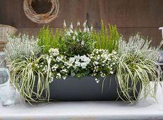 Autumn plantation balcony - Jardines, terrazas y porches que inspiran - Balkon Balcony Planters, Balcony Flowers, Fall Planters, Balcony Garden, Cut Garden, Container Flowers, Container Plants, Container Gardening, Succulent Containers