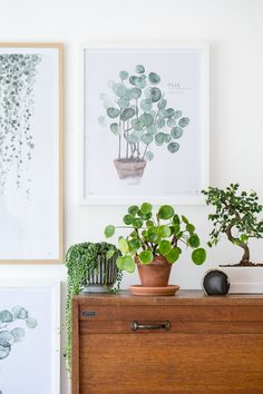 Love how the painting matches the actual plant.  Beautiful mix of everything - love it all.