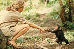 Tanzania   1964   Fotografia di Hugo Van Lawick   Guardando questo gesto semplice tra la primatologa Jane Goodall e il piccolo scimpanzé Flint si potrebbe pensare che il mondo sia un'unica grande famiglia... E' la filosofia che dal 1888 accompagna la National  Geographic    Society, che per m