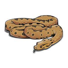 Perfect Earth - Anaconda