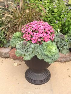 Planting a versatile Fall Planter with Ornamental Kale adding a Pink Mum