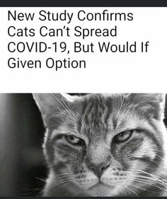 Stupid Funny Memes, Haha Funny, Funny Cats, Funny Animals, Funny Quotes, Hilarious, I Love To Laugh, Make You Smile, Satire