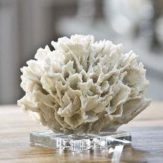 Google Image Result for http://oceanhomeguru.com/wp-content/uploads/2011/01/Coral-on-Crystal-Sand.jpeg