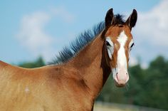 Horse.. I love his markings