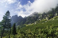 Mala Studena dolina flora